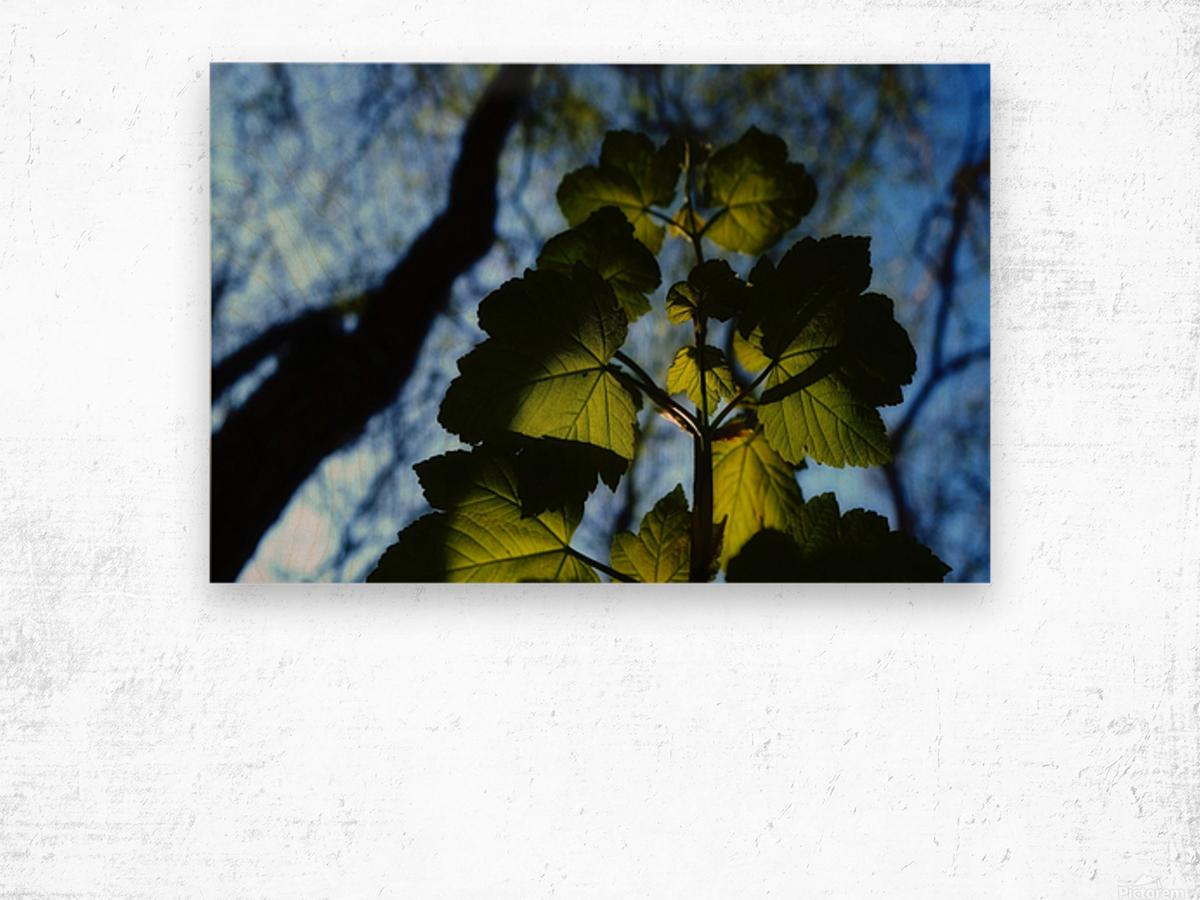 Leaves in the Summer Wood print