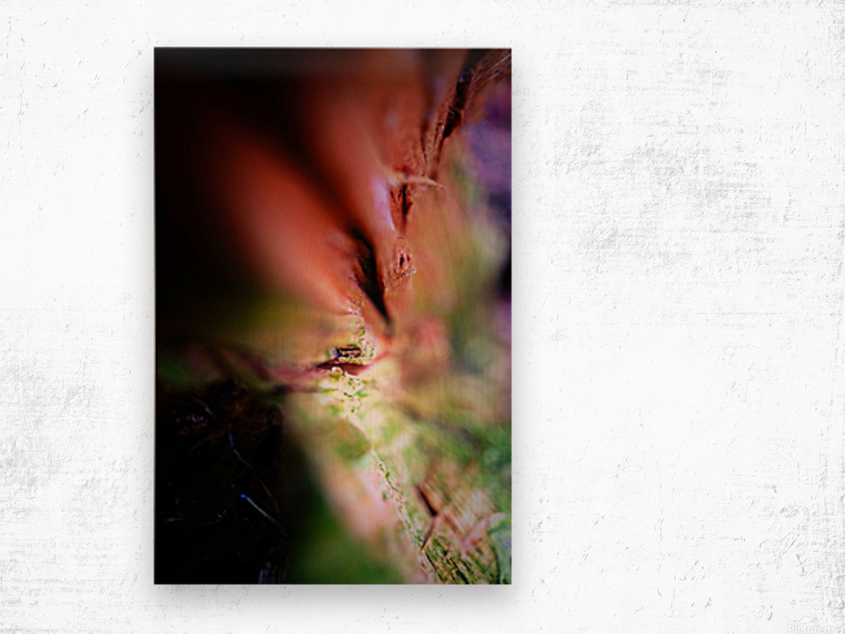 Abstract Macro Nature Photography 84 Wood print