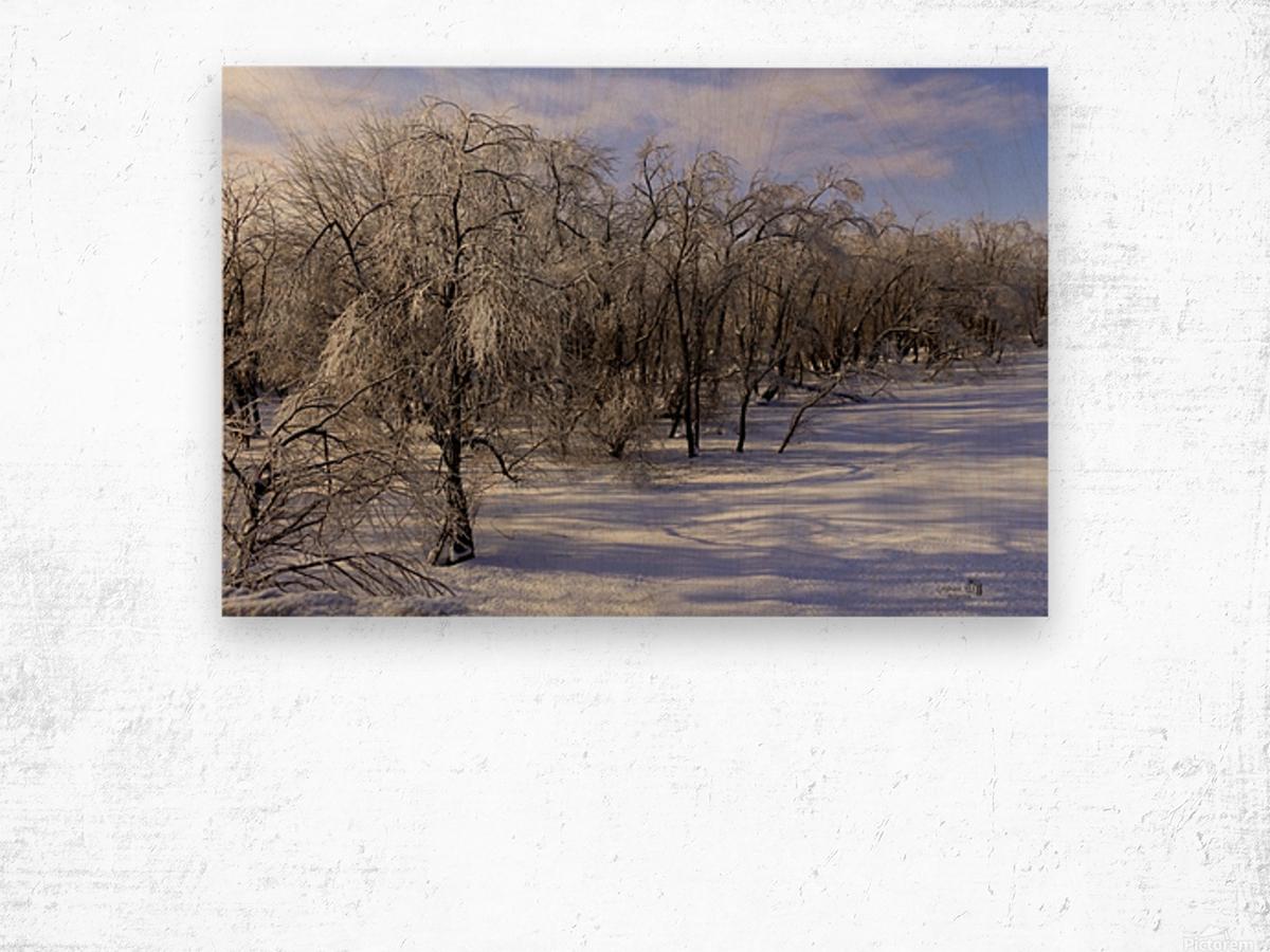 Matin glacé- Iced morning Wood print