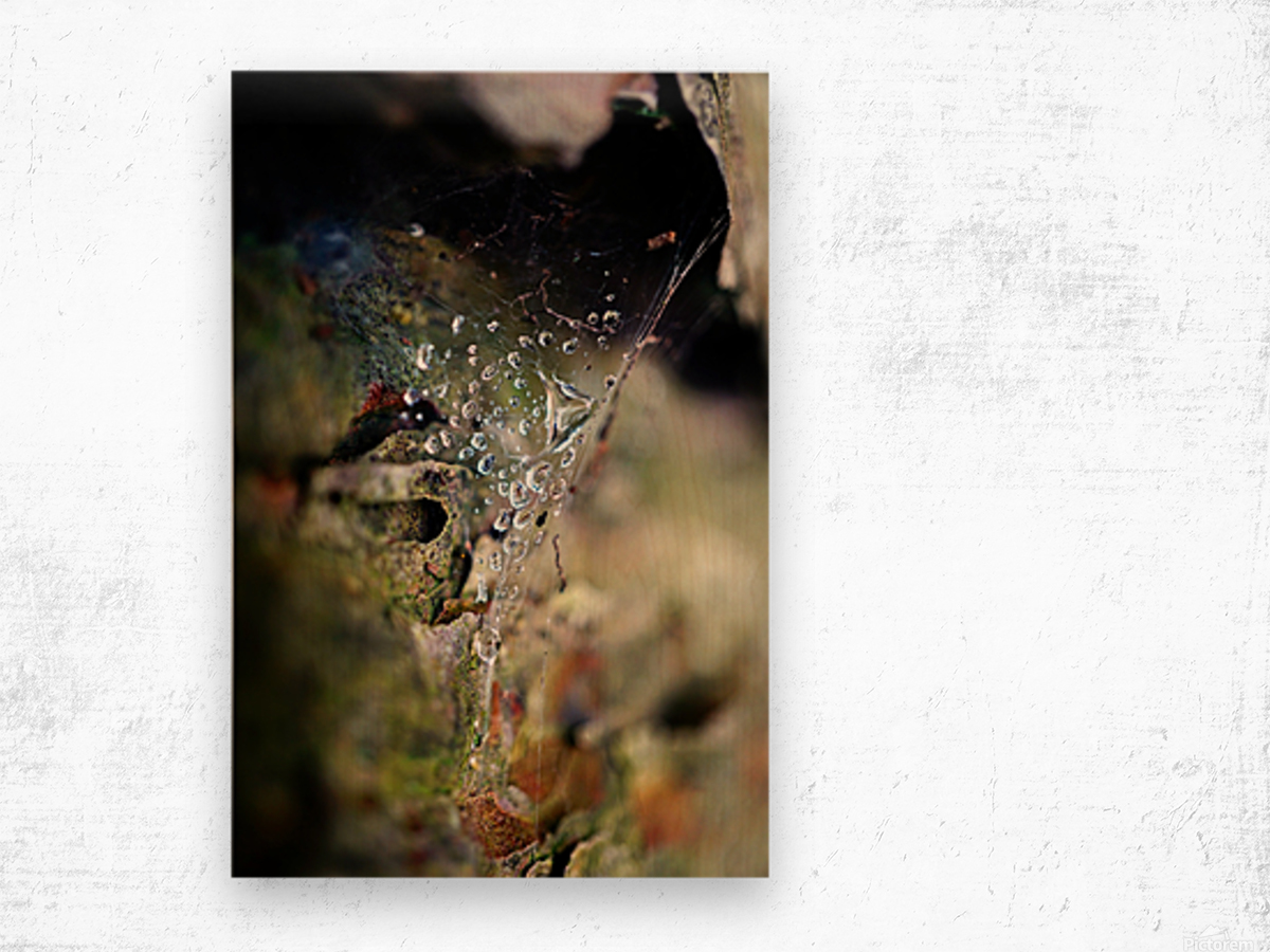 Macro Raindrop Photography Art 44 Wood print