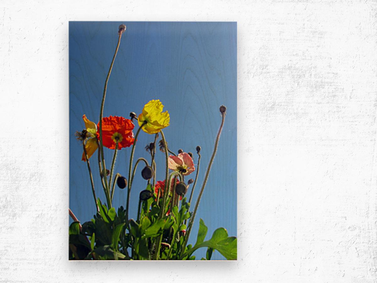 Spring Sky Garden Wood print