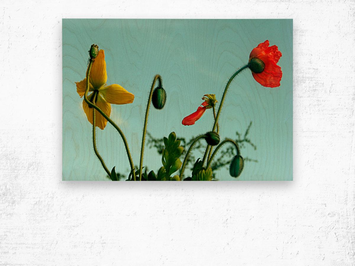 Spring Sky Flowers Wood print