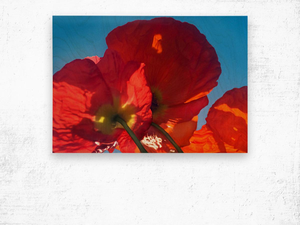 Red Poppy Sky Wood print
