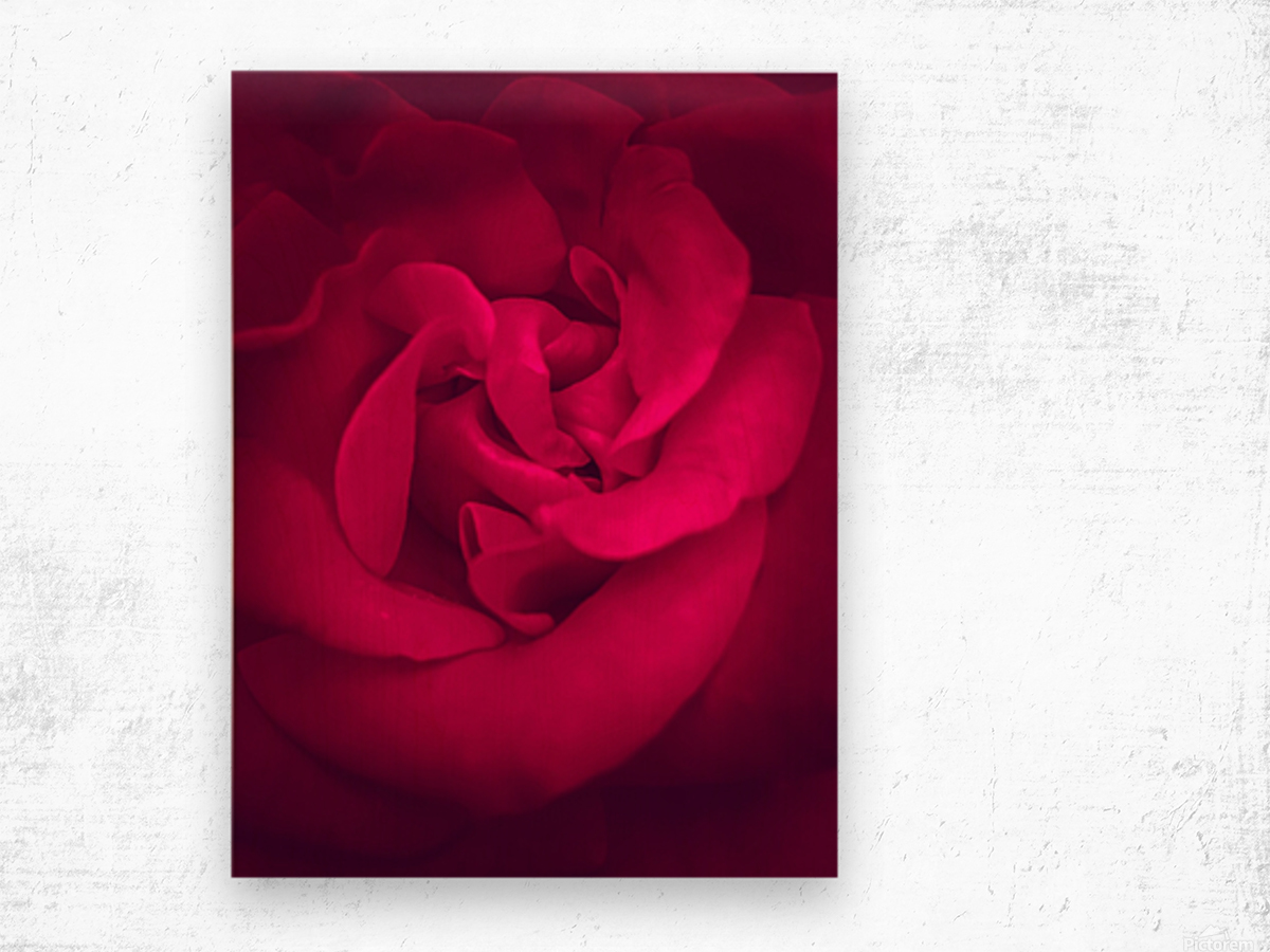 red rose background Wood print