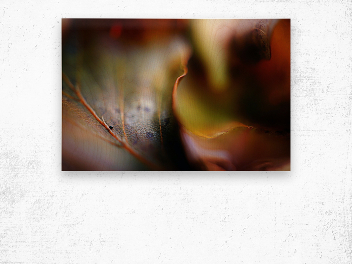 Abstract Mystic and Colourful Leaf 01 Wood print