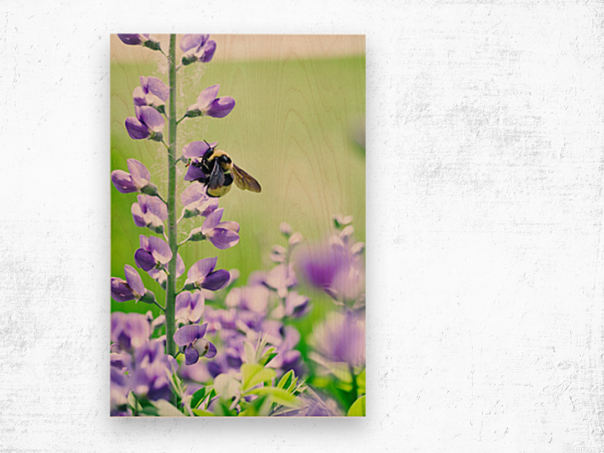 Bee In Flight 2 Wood print