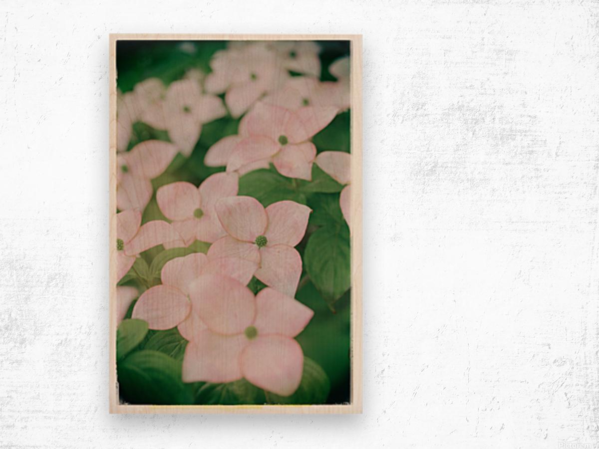 Sea of Pink Wood print
