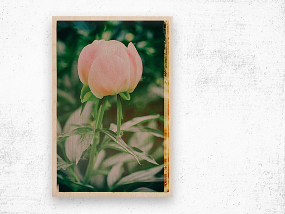 About To Bloom Wood print