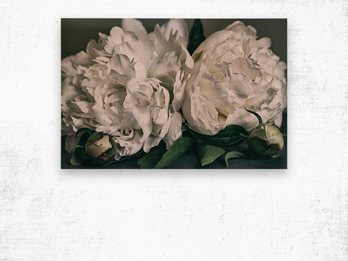Two Peonies Wood print