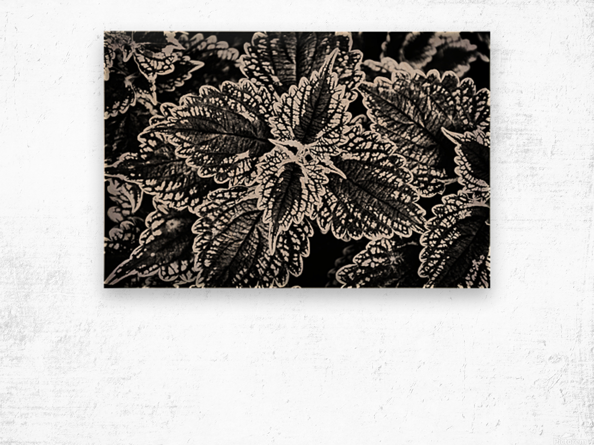 Bold Leaves Wood print