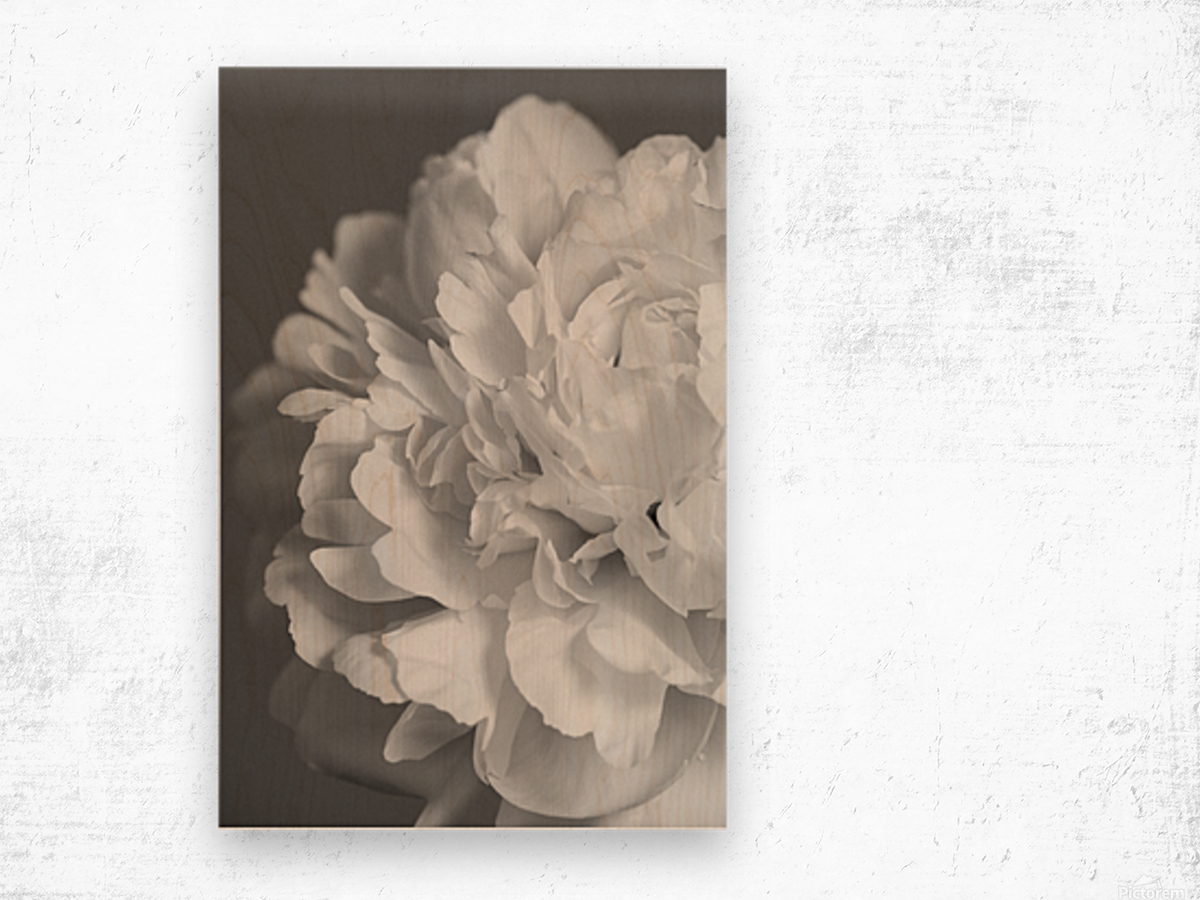 Peony in Black & White Wood print