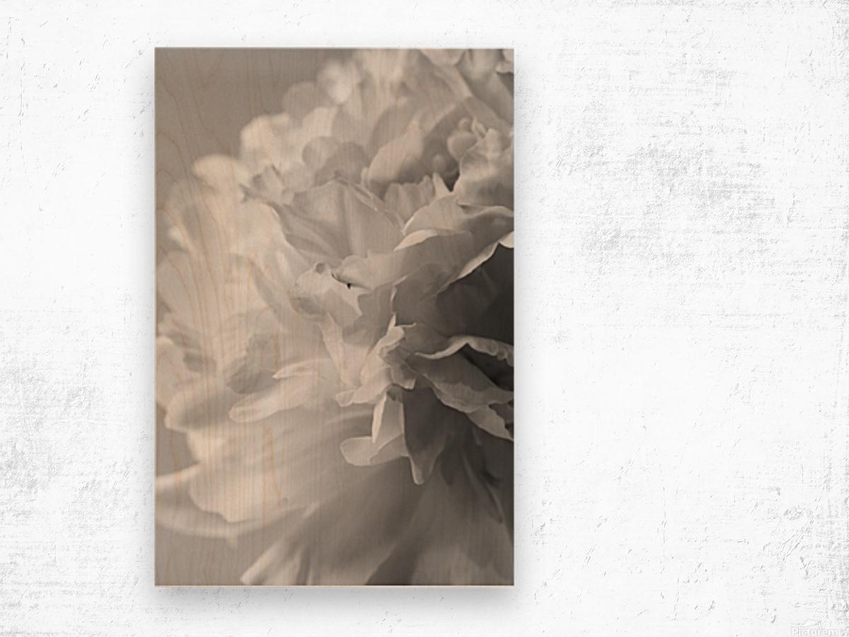 Softness in Black & White Wood print