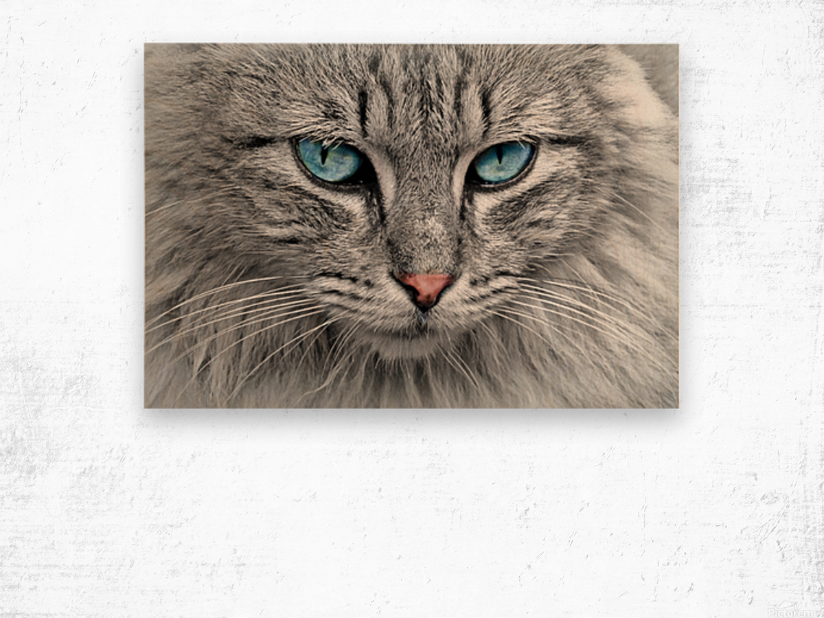 cat animal cat portrait mackerel Wood print