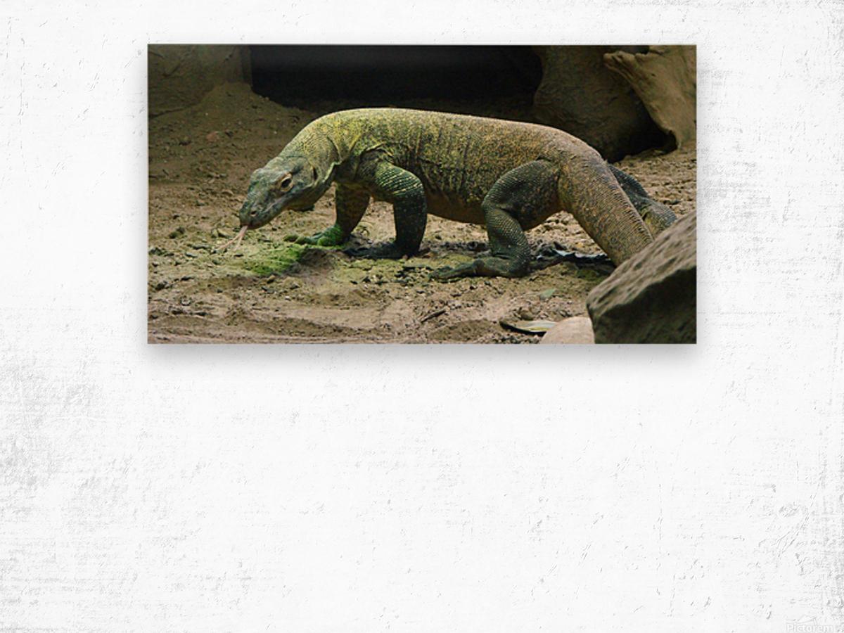 komodo dragon komodo lizard reptile Wood print
