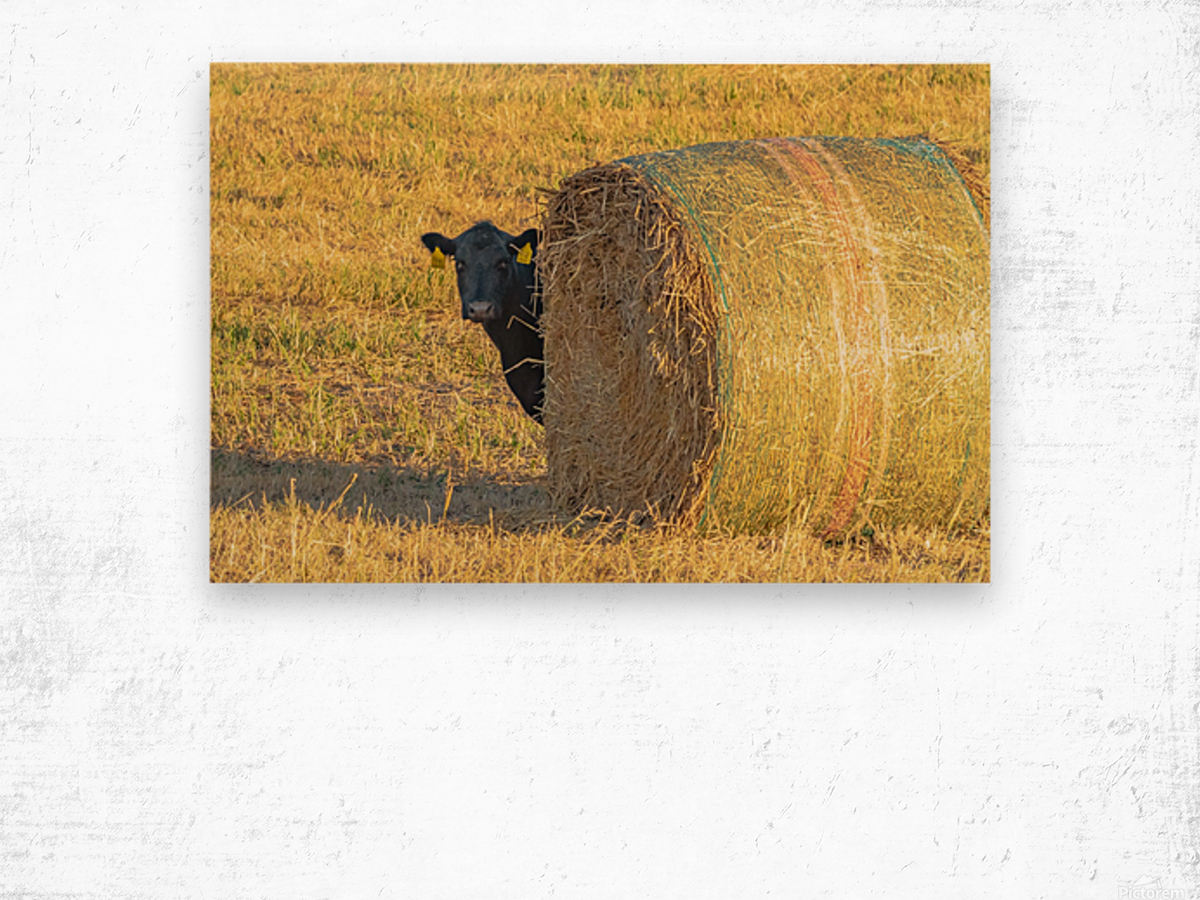 Hay.You Looking For Me Wood print