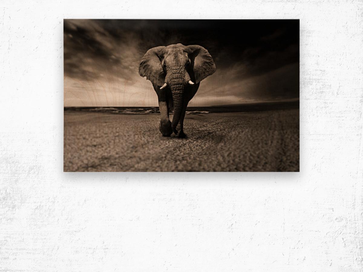 elephant animal africa safari Wood print