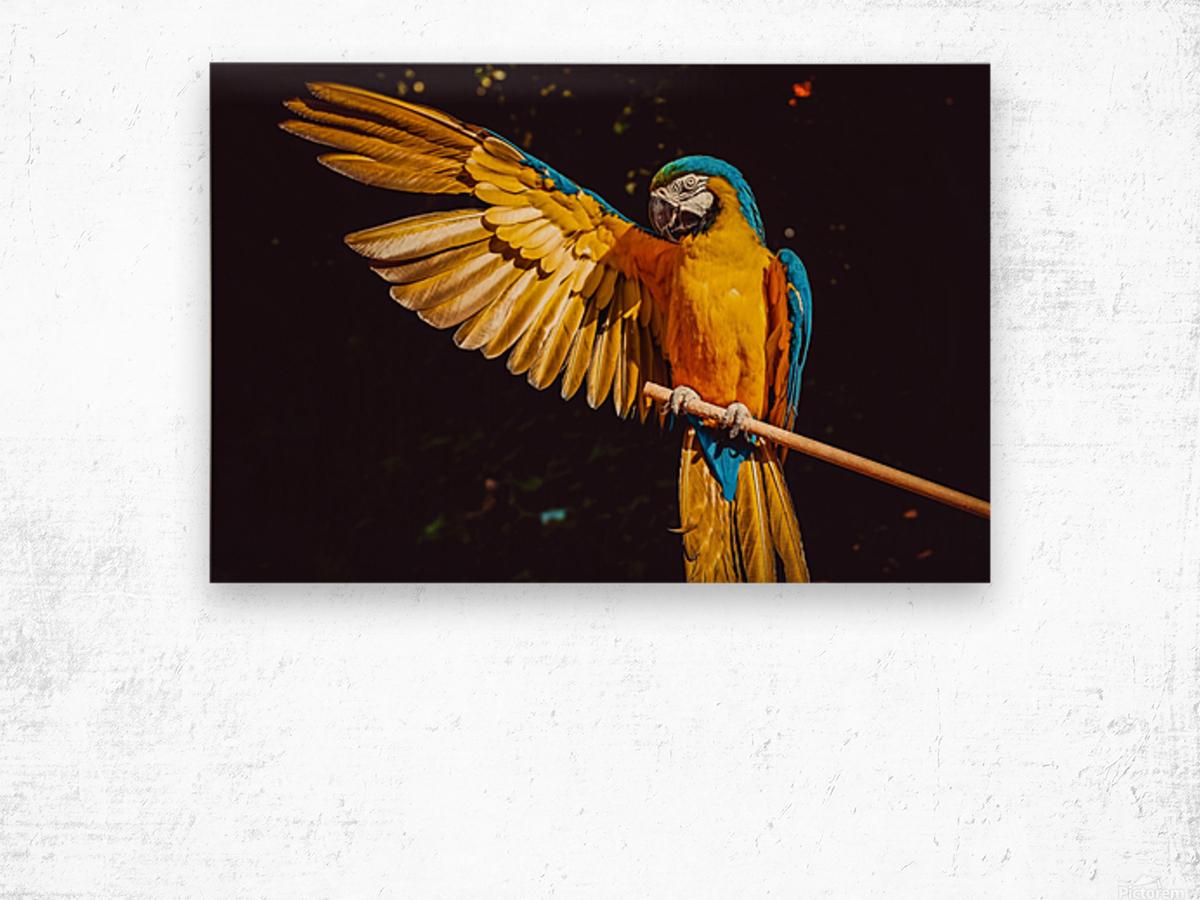 ara parrot yellow macaw bird Wood print
