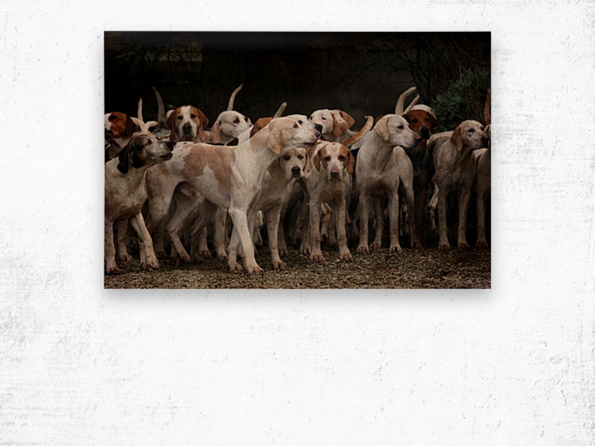 dog herd canine animal pet hounds Wood print