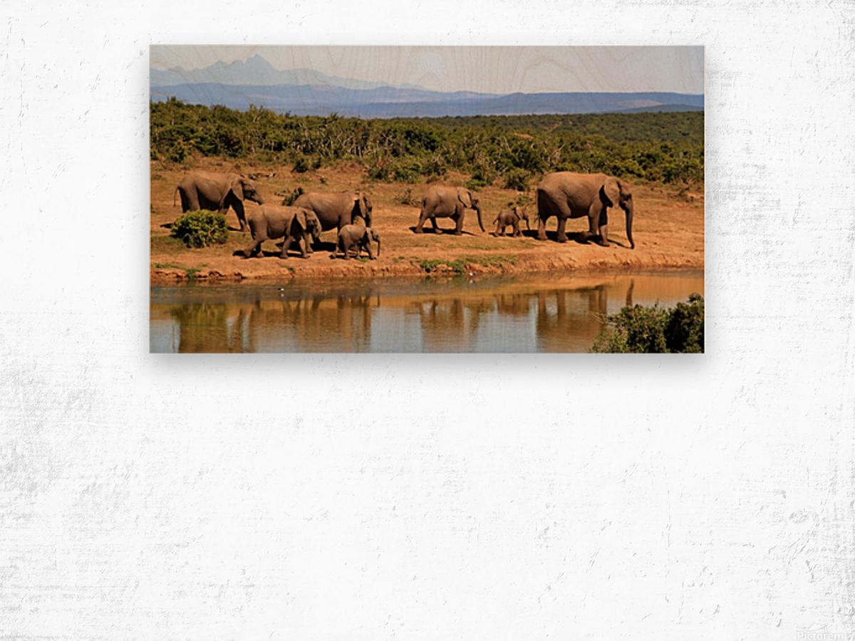 elephant herd of elephants Wood print