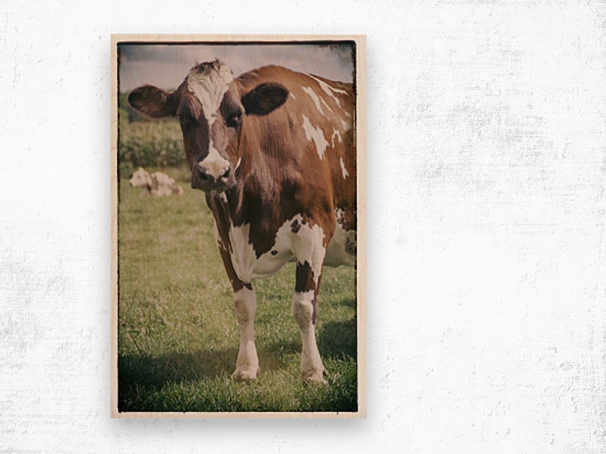 Brown Cow Wood print