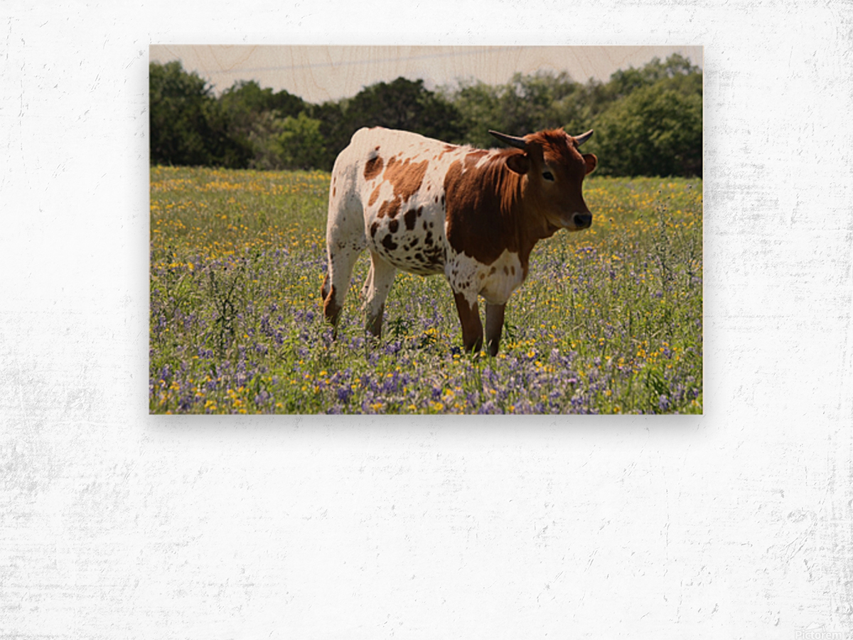 Longhorn and Bluebonnets Wood print
