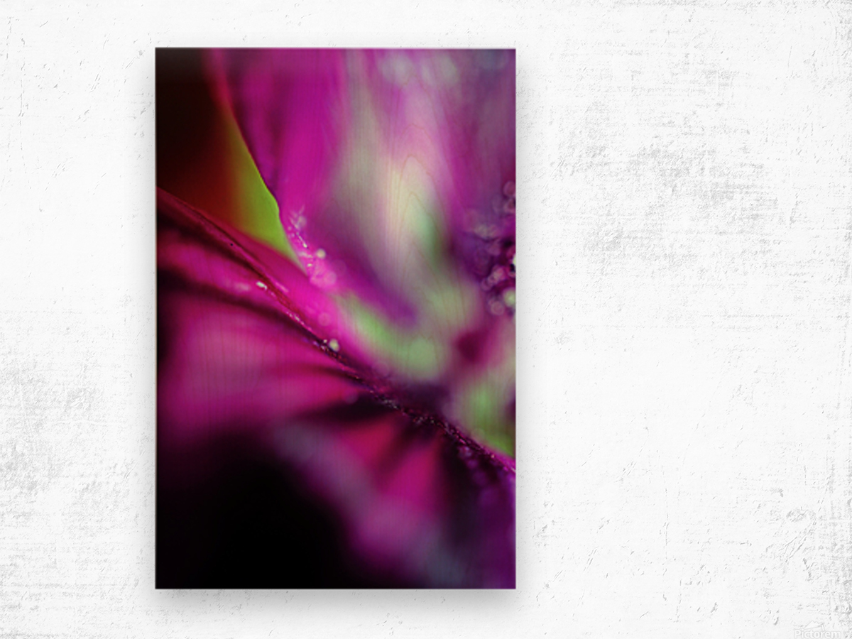 Abstract Pop Color Flower Photography 05 Wood print