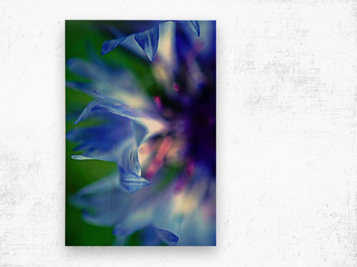 Abstract Pop Color Flower Photography 16 Wood print