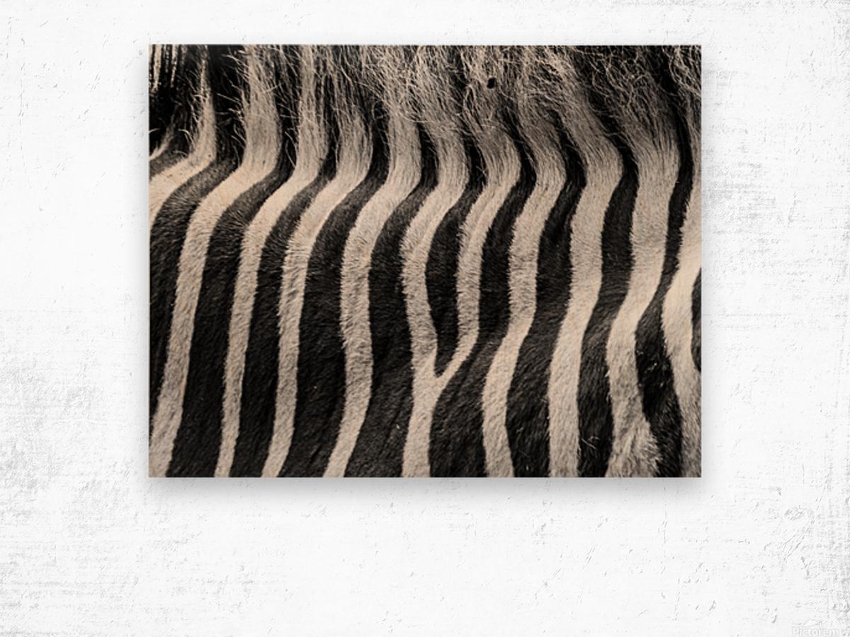 Zebra Details Wood print