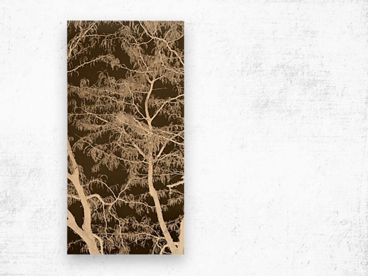Lacey Sepia Tree middle Wood print
