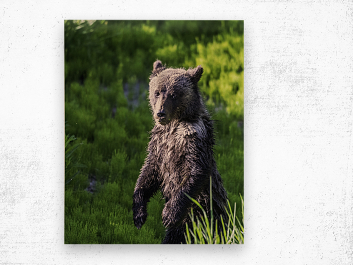 A grizzly cub named Pepper Wood print