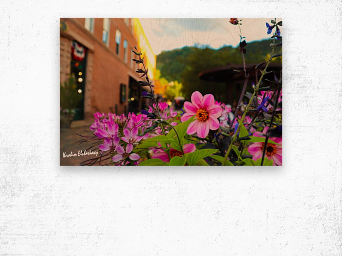 Beautiful pink and purple flowers in European city Wood print