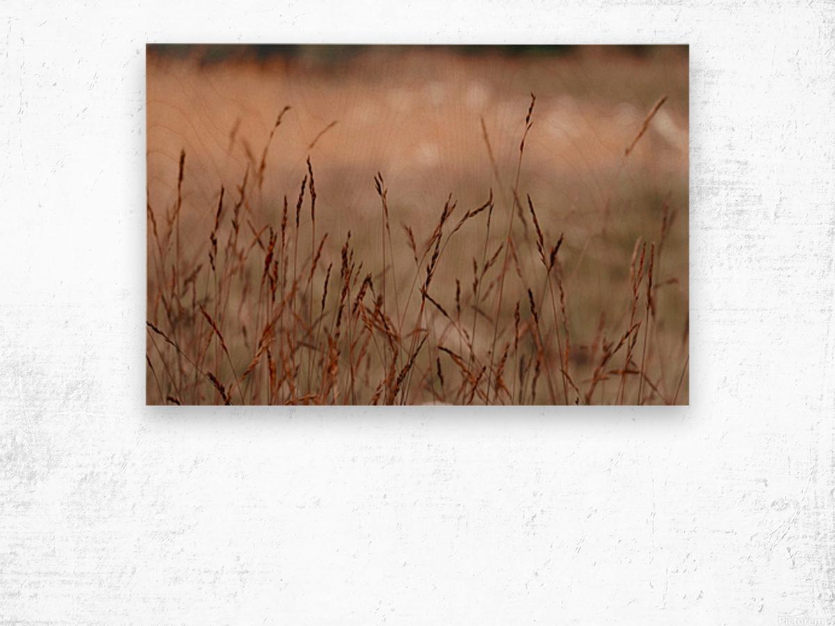 20190802_181834 Wood print