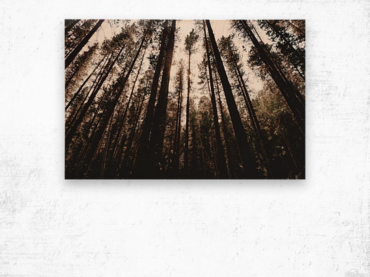 20190802_182121 Wood print