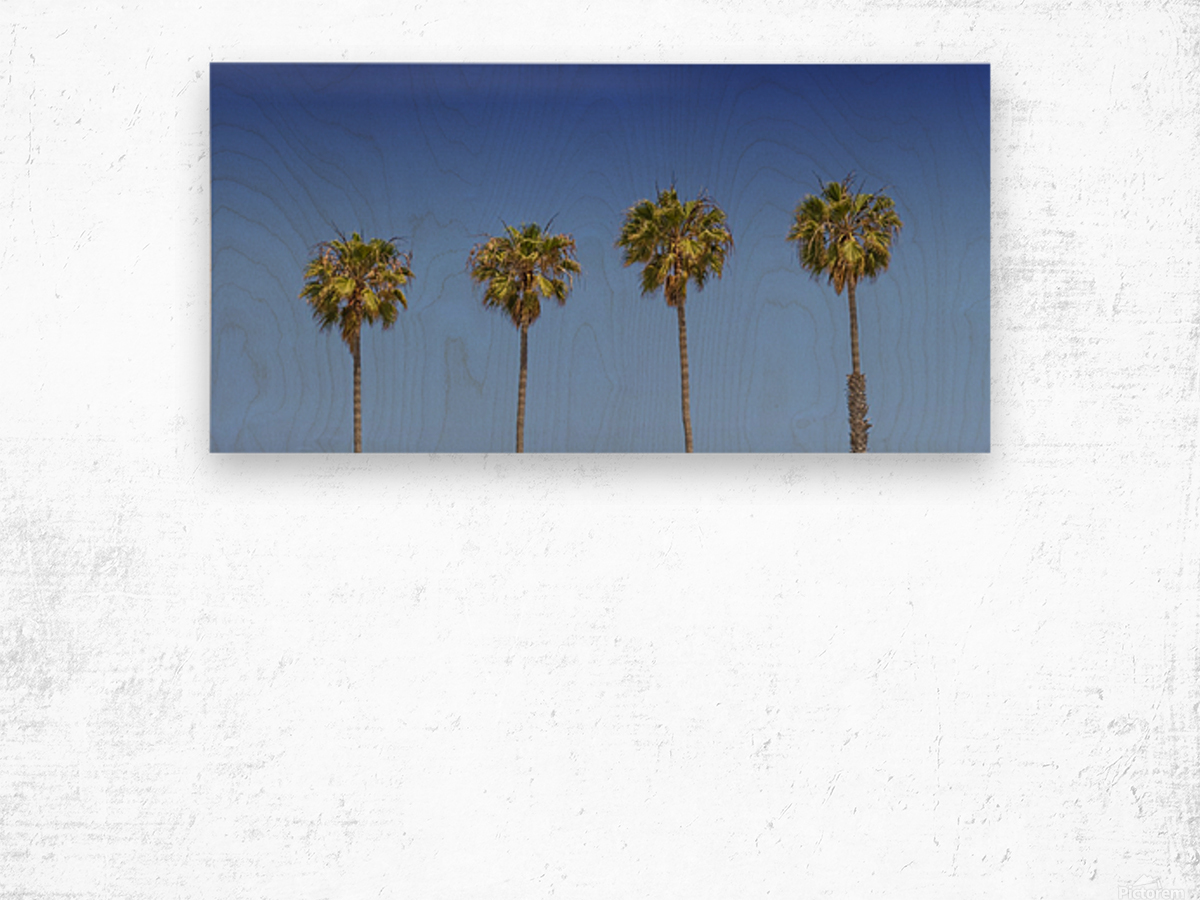 Lovely Palm Trees | Panorama Wood print