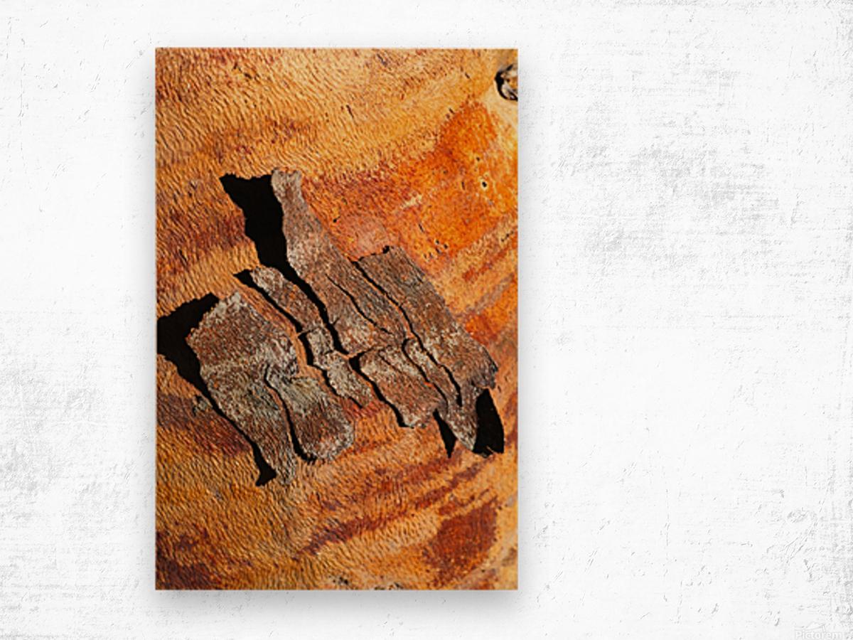 Flowering Gum Bark Wood print