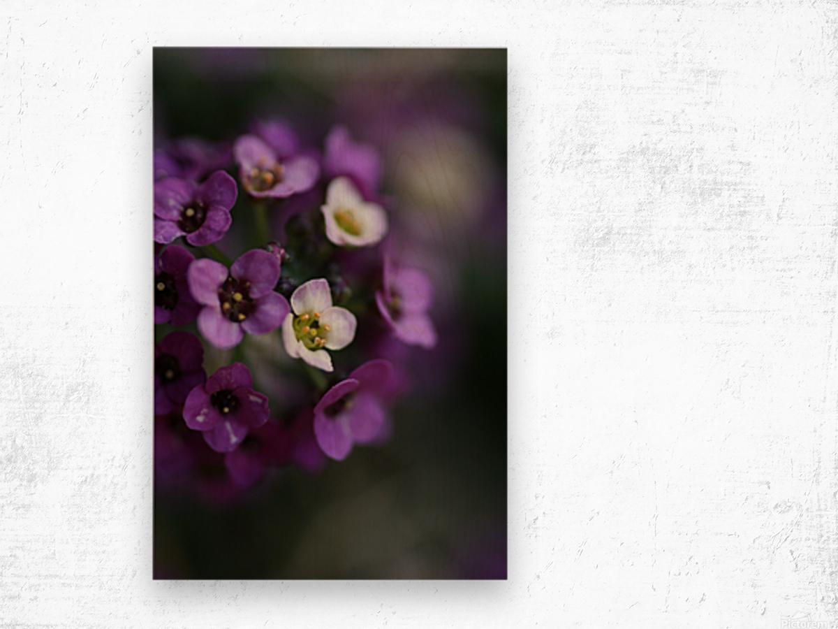 Flower Ball Allysium Flowers Wood print