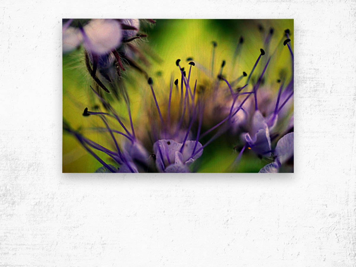 Abstract Pop Color Flower Photography 17 Wood print