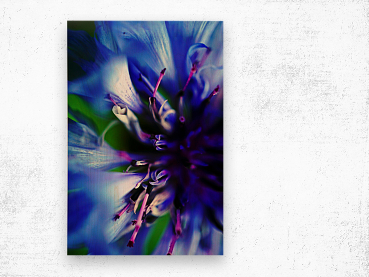 Abstract Pop Color Flower Photography 21 Wood print