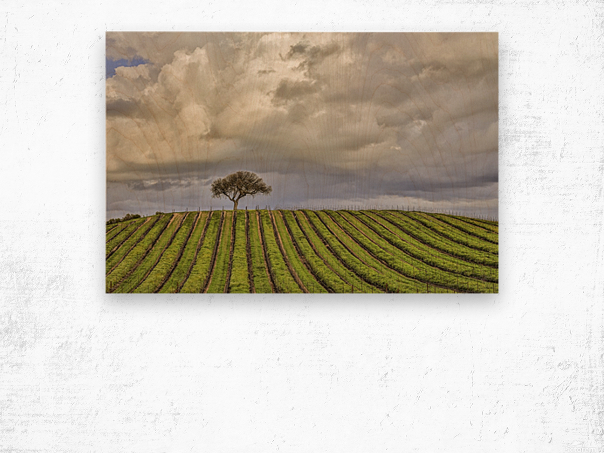 alone among the vines Wood print
