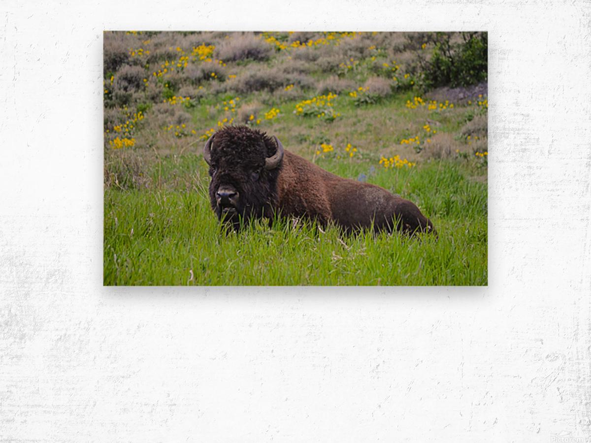 Bison in Wildflowers Wood print