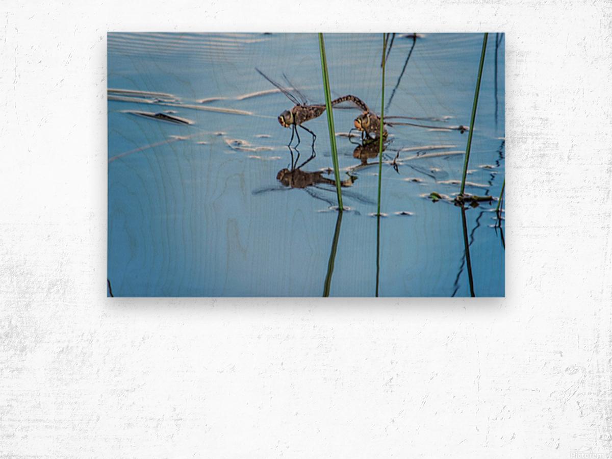 Dragonflies  Wood print