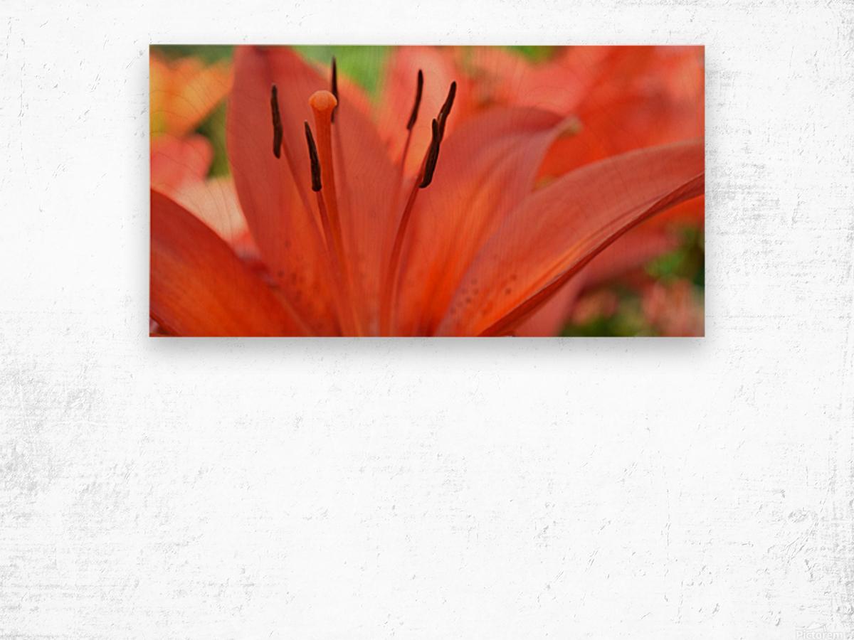 Beautiful In Orange Photography Wood print