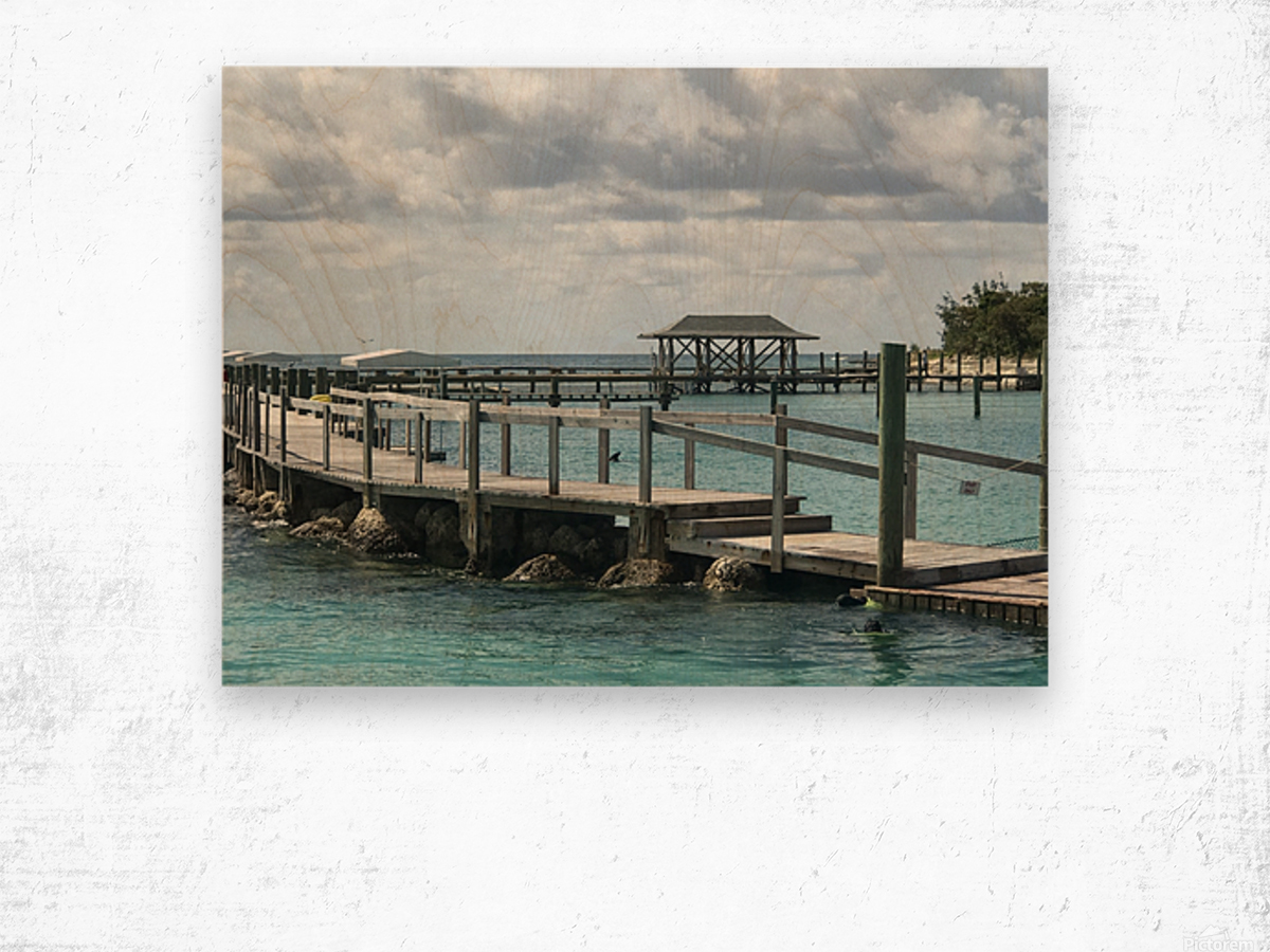 Dolphin Cove Wood print