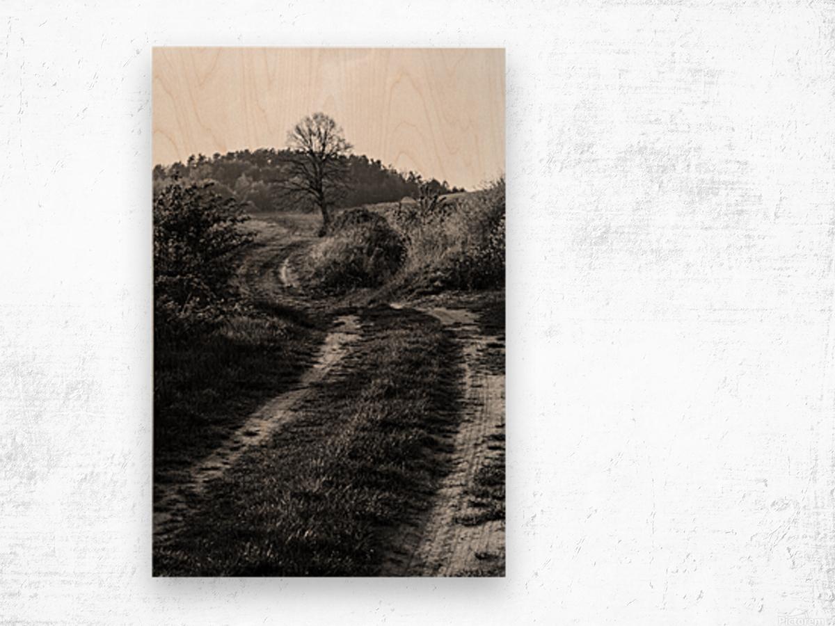 The path Wood print