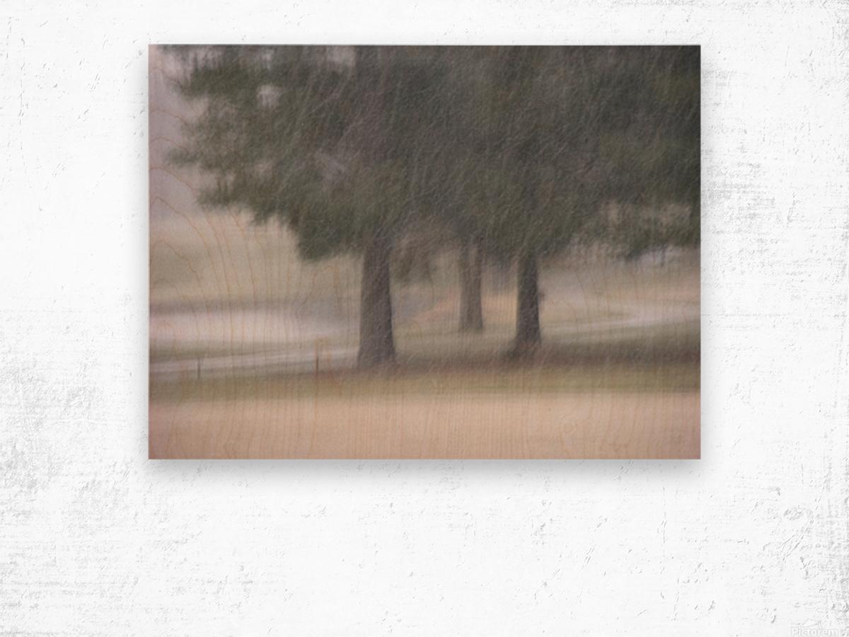 Soft Snow Fall Photograph Wood print