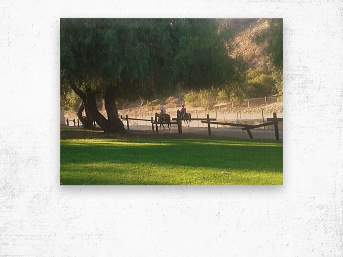 Horses at the park summertime  Wood print