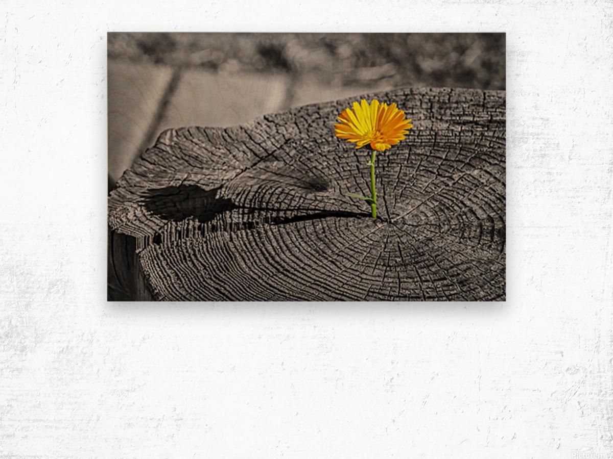 Life Persists Wood print