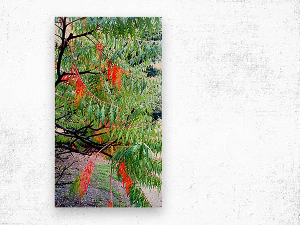 Rasta Leaves Wood print