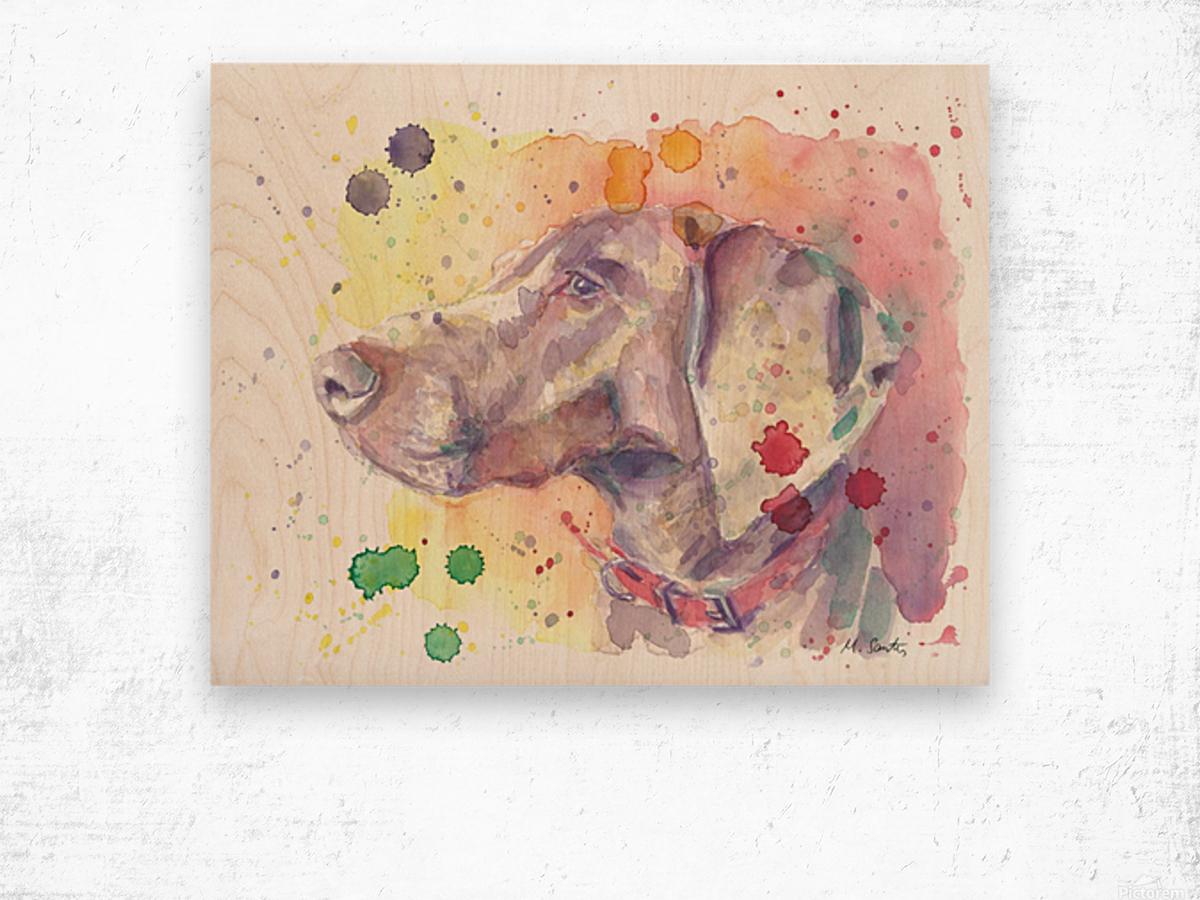 Weimaraner Dog - Portrait of Nandi Wood print