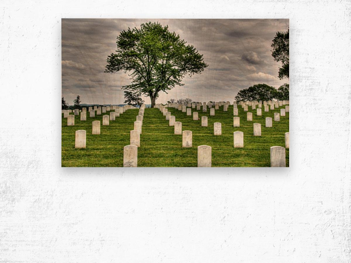 Cemetery Memorial Flags Wood print